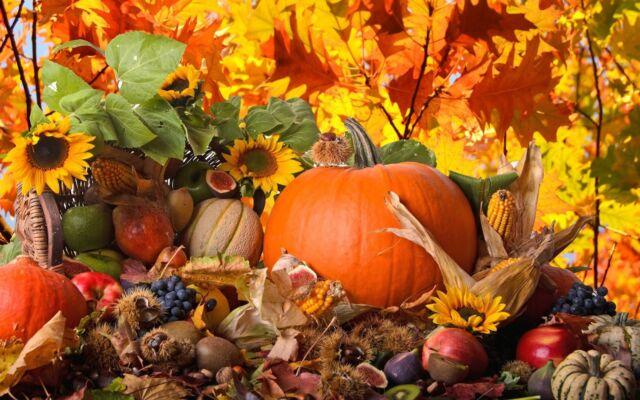 Benvenuto autunno la natura offre il meglio delle stagioni