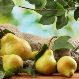 Do you know pear benefits?