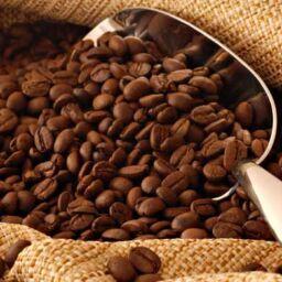 caffeina cultura