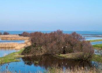 Italy, Po delta park, the south area of the Comacchio lagoon
